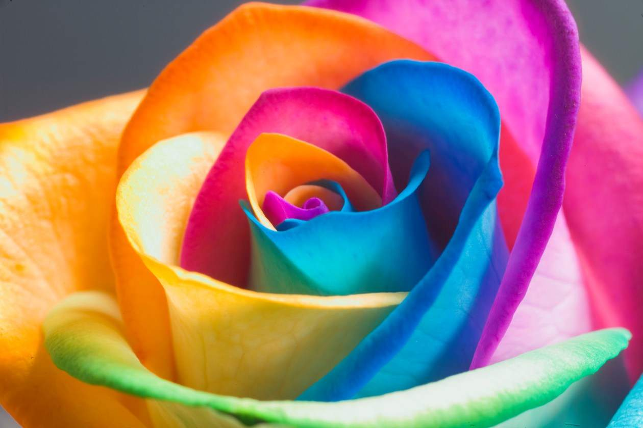Beautiful-Happy-Flowers-Pictures-And-Wallpapers26